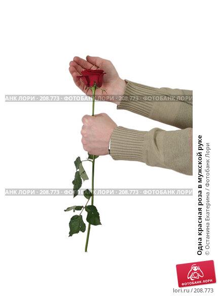 Одна красная роза в мужской руке, фото № 208773, снято 15 января 2008 г. (c) Останина Екатерина / Фотобанк Лори
