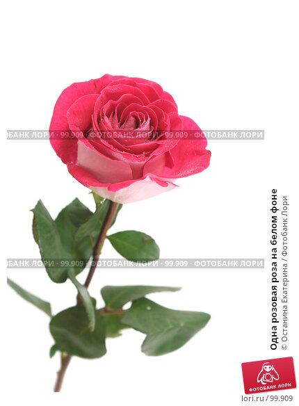 Одна розовая роза на белом фоне, фото № 99909, снято 12 октября 2007 г. (c) Останина Екатерина / Фотобанк Лори