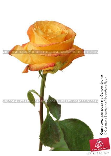 Одна желтая роза на белом фоне, фото № 176857, снято 4 августа 2007 г. (c) Останина Екатерина / Фотобанк Лори