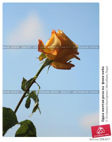 Одна желтая роза на  фоне неба, фото № 208817, снято 4 августа 2007 г. (c) Останина Екатерина / Фотобанк Лори