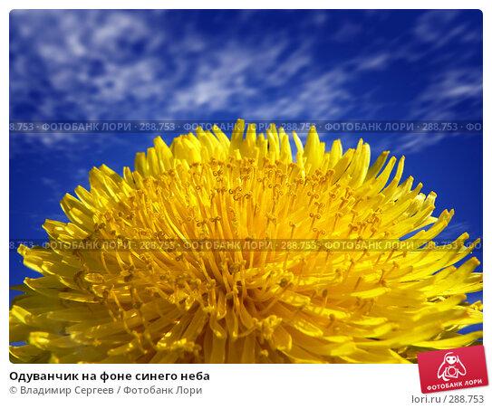 Купить «Одуванчик на фоне синего неба», фото № 288753, снято 14 декабря 2017 г. (c) Владимир Сергеев / Фотобанк Лори