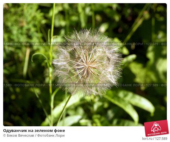 Одуванчик на зеленом фоне, фото № 127589, снято 14 июля 2007 г. (c) Бяков Вячеслав / Фотобанк Лори
