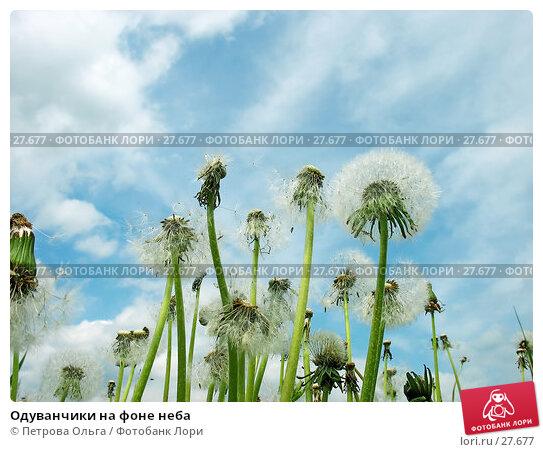 Купить «Одуванчики на фоне неба», фото № 27677, снято 27 мая 2006 г. (c) Петрова Ольга / Фотобанк Лори
