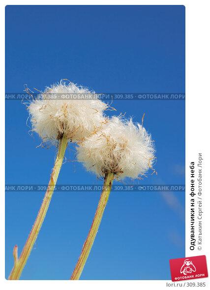 Купить «Одуванчики на фоне неба», фото № 309385, снято 17 мая 2008 г. (c) Катыкин Сергей / Фотобанк Лори