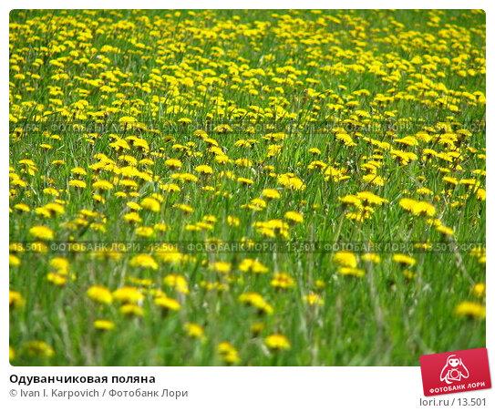 Купить «Одуванчиковая поляна», фото № 13501, снято 4 июня 2006 г. (c) Ivan I. Karpovich / Фотобанк Лори