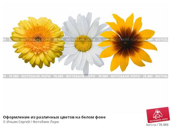 Купить «Оформление из различных цветов на белом фоне», фото № 78989, снято 19 декабря 2017 г. (c) Ильин Сергей / Фотобанк Лори