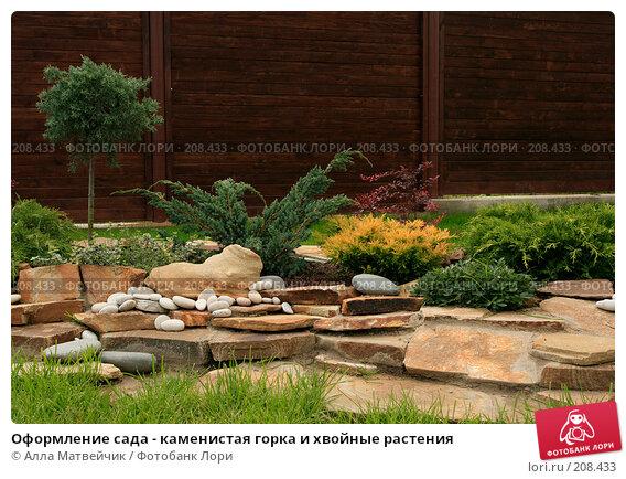 Оформление сада - каменистая горка и хвойные растения, фото № 208433, снято 8 сентября 2007 г. (c) Алла Матвейчик / Фотобанк Лори