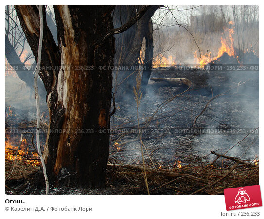 Огонь, фото № 236233, снято 29 марта 2008 г. (c) Карелин Д.А. / Фотобанк Лори