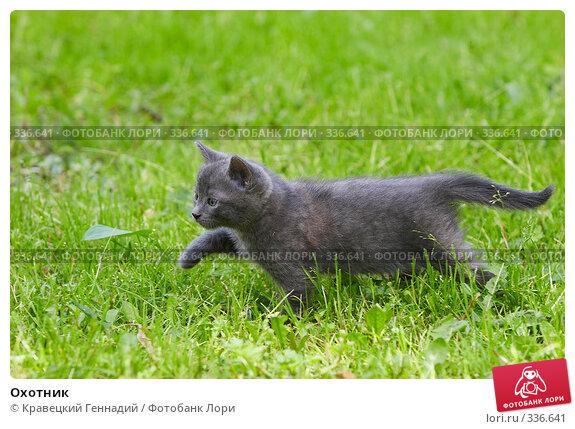 Охотник, фото № 336641, снято 26 июня 2017 г. (c) Кравецкий Геннадий / Фотобанк Лори
