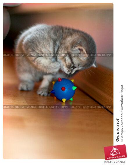 Ой, кто это?, фото № 28961, снято 13 мая 2006 г. (c) Игорь Соколов / Фотобанк Лори
