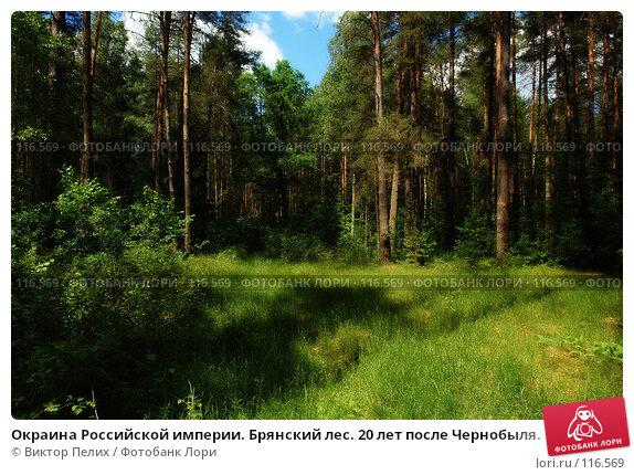 Купить «Окраина Российской империи. Брянский лес. 20 лет после Чернобыля.», фото № 116569, снято 9 июня 2007 г. (c) Виктор Пелих / Фотобанк Лори