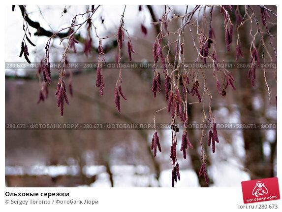 Ольховые сережки, фото № 280673, снято 1 марта 2008 г. (c) Sergey Toronto / Фотобанк Лори