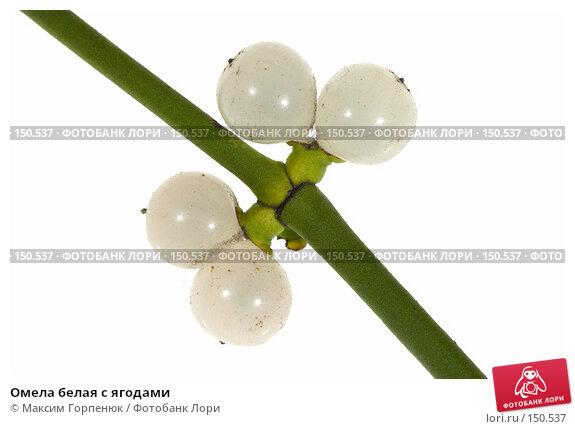 Омела белая с ягодами, фото № 150537, снято 28 марта 2017 г. (c) Максим Горпенюк / Фотобанк Лори