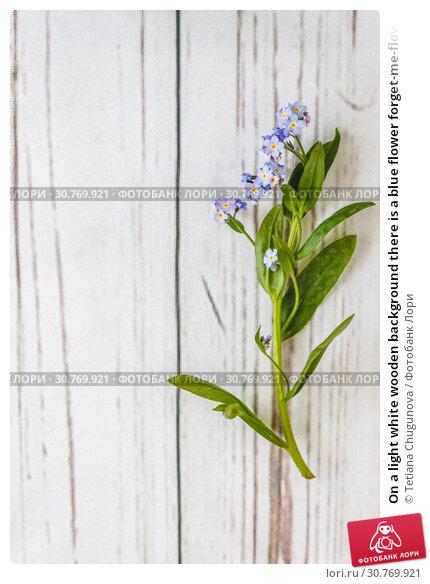 Купить «On a light white wooden background there is a blue flower forget-me-flower. Blur and close-up.», фото № 30769921, снято 4 мая 2017 г. (c) Tetiana Chugunova / Фотобанк Лори