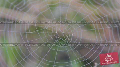 On the web hanging drops of dew. Interlacing threads shrouded in water drops. Стоковое видео, видеограф Константин Мерцалов / Фотобанк Лори
