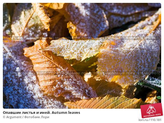Купить «Опавшие листья и иней. Autumn leaves», фото № 110181, снято 5 ноября 2007 г. (c) Argument / Фотобанк Лори