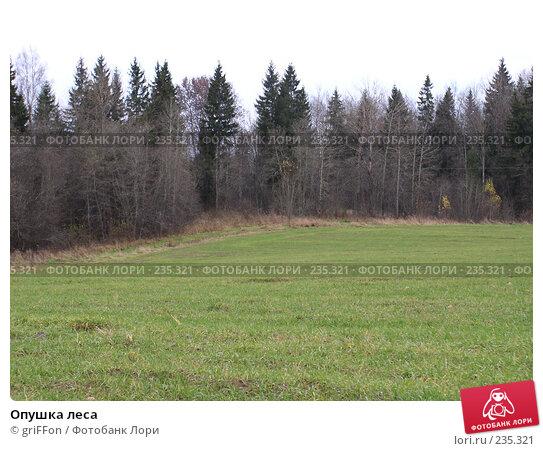 Купить «Опушка леса», фото № 235321, снято 24 октября 2004 г. (c) griFFon / Фотобанк Лори