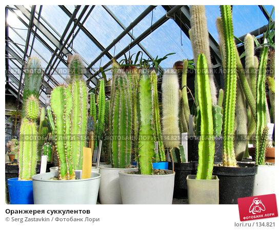 Купить «Оранжерея суккулентов», фото № 134821, снято 3 марта 2005 г. (c) Serg Zastavkin / Фотобанк Лори