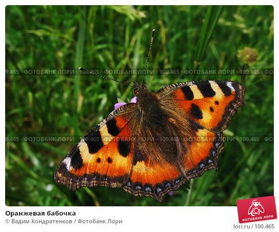 Купить «Оранжевая бабочка», фото № 100465, снято 26 апреля 2018 г. (c) Вадим Кондратенков / Фотобанк Лори