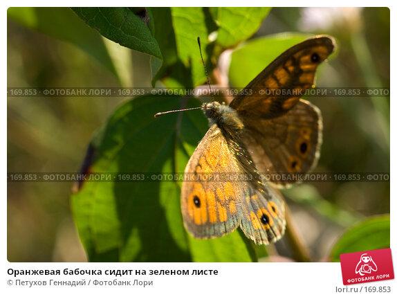 Оранжевая бабочка сидит на зеленом листе, фото № 169853, снято 12 августа 2007 г. (c) Петухов Геннадий / Фотобанк Лори