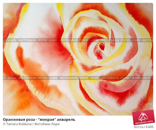 "Оранжевая роза - ""мокрая"" акварель, иллюстрация № 4605 (c) Tamara Kulikova / Фотобанк Лори"
