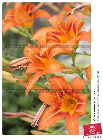 Оранжевые лилии, фото № 64393, снято 30 июня 2007 г. (c) Биржанова Юлия / Фотобанк Лори