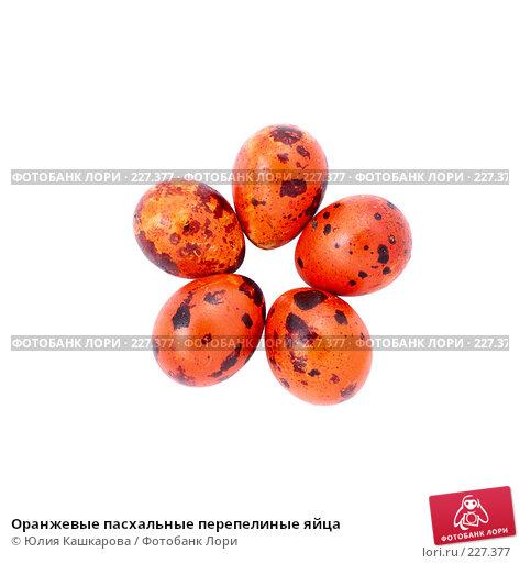 Оранжевые пасхальные перепелиные яйца, фото № 227377, снято 15 марта 2008 г. (c) Юлия Кашкарова / Фотобанк Лори