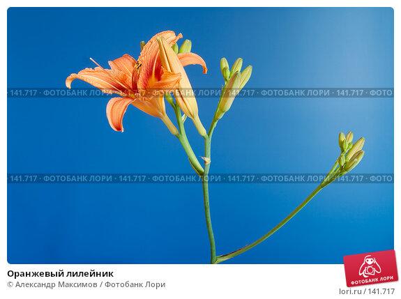 Купить «Оранжевый лилейник», фото № 141717, снято 15 июля 2006 г. (c) Александр Максимов / Фотобанк Лори
