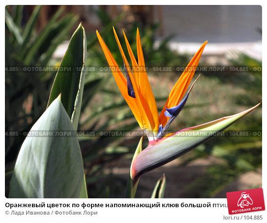 Оранжевый цветок по форме напоминающий клюв большой птицы, фото № 104885, снято 4 декабря 2016 г. (c) Лада Иванова / Фотобанк Лори
