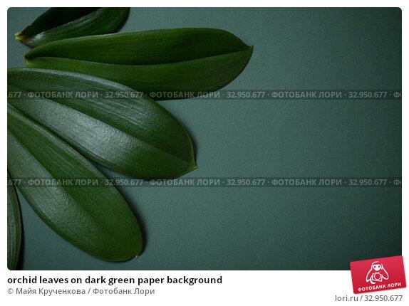 orchid leaves on dark green paper background. Стоковое фото, фотограф Майя Крученкова / Фотобанк Лори
