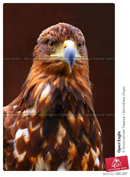 Орел Eagle, фото № 306297, снято 4 июня 2007 г. (c) Константин Тавров / Фотобанк Лори