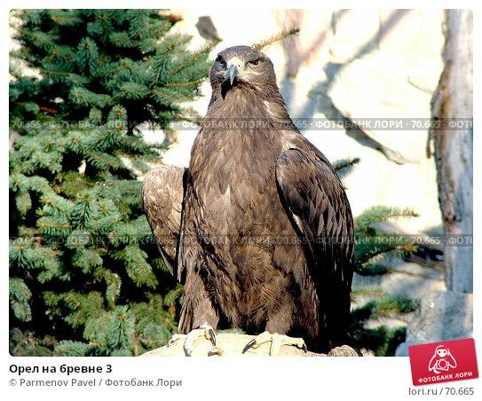 Орел на бревне 3, фото № 70665, снято 6 ноября 2005 г. (c) Parmenov Pavel / Фотобанк Лори