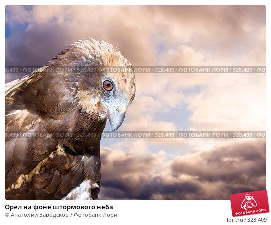 Орел на фоне штормового неба, фото № 328409, снято 30 мая 2006 г. (c) Анатолий Заводсков / Фотобанк Лори