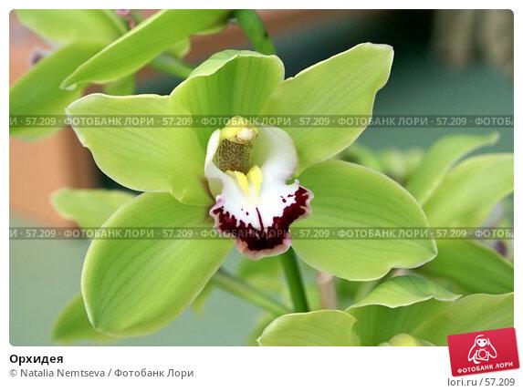Орхидея, эксклюзивное фото № 57209, снято 7 апреля 2007 г. (c) Natalia Nemtseva / Фотобанк Лори