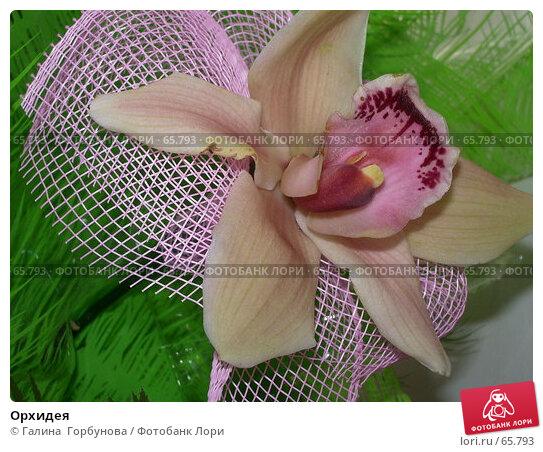 Купить «Орхидея», фото № 65793, снято 7 июня 2005 г. (c) Галина  Горбунова / Фотобанк Лори