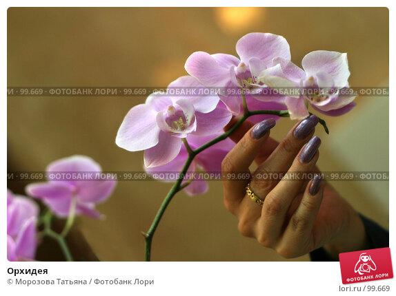 Орхидея, фото № 99669, снято 22 июля 2017 г. (c) Морозова Татьяна / Фотобанк Лори