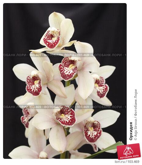 Орхидея, фото № 103469, снято 5 декабря 2016 г. (c) Asja Sirova / Фотобанк Лори