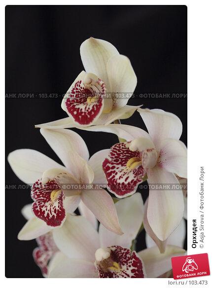 Орхидея, фото № 103473, снято 30 марта 2017 г. (c) Asja Sirova / Фотобанк Лори