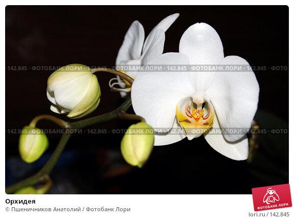 Орхидея, фото № 142845, снято 9 сентября 2006 г. (c) Пшеничников Анатолий / Фотобанк Лори