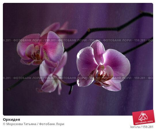 Орхидея, фото № 159281, снято 29 апреля 2017 г. (c) Морозова Татьяна / Фотобанк Лори