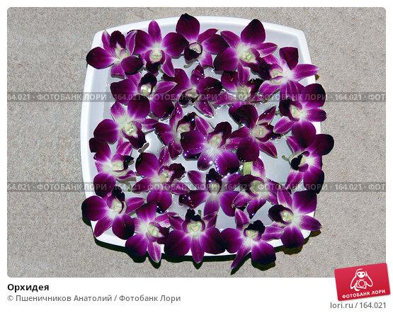 Орхидея, фото № 164021, снято 4 декабря 2007 г. (c) Пшеничников Анатолий / Фотобанк Лори