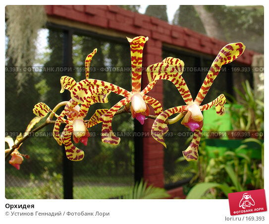 Орхидея, фото № 169393, снято 29 апреля 2005 г. (c) Устинов Геннадий / Фотобанк Лори