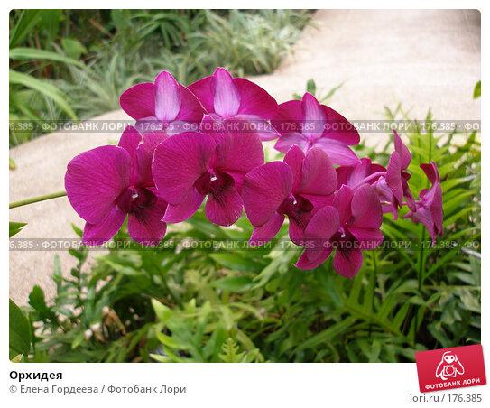 Орхидея, фото № 176385, снято 15 марта 2007 г. (c) Елена Гордеева / Фотобанк Лори