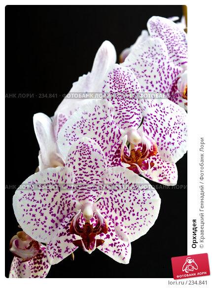 Орхидея, фото № 234841, снято 27 марта 2017 г. (c) Кравецкий Геннадий / Фотобанк Лори