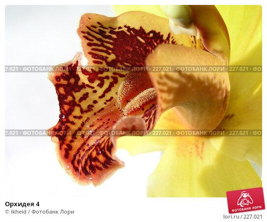 Купить «Орхидея 4», фото № 227021, снято 11 марта 2008 г. (c) ikheid / Фотобанк Лори