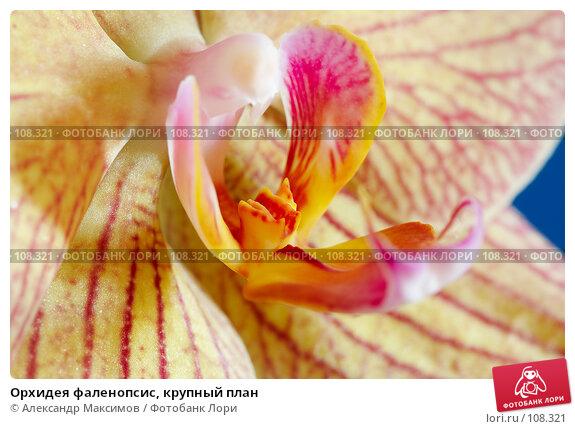 Орхидея фаленопсис, крупный план, фото № 108321, снято 23 сентября 2006 г. (c) Александр Максимов / Фотобанк Лори