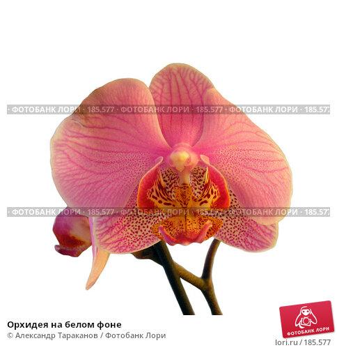 Орхидея на белом фоне, эксклюзивное фото № 185577, снято 26 июня 2017 г. (c) Александр Тараканов / Фотобанк Лори