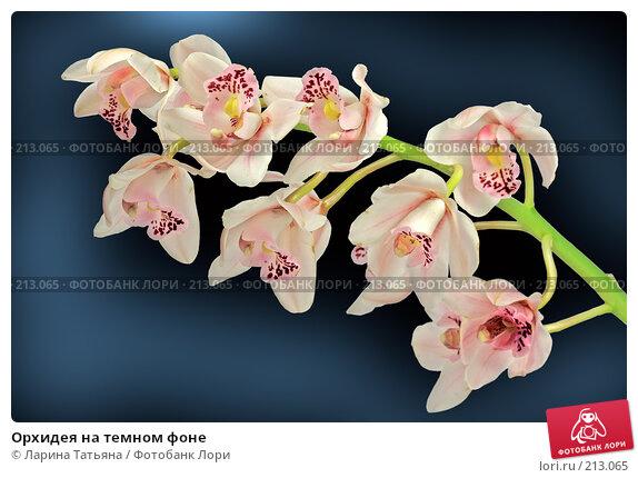 Орхидея на темном фоне, фото № 213065, снято 14 февраля 2008 г. (c) Ларина Татьяна / Фотобанк Лори