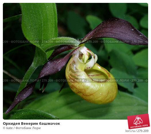 Орхидея Венерин башмачок, фото № 279209, снято 5 июня 2007 г. (c) Екатерина Цуканова / Фотобанк Лори