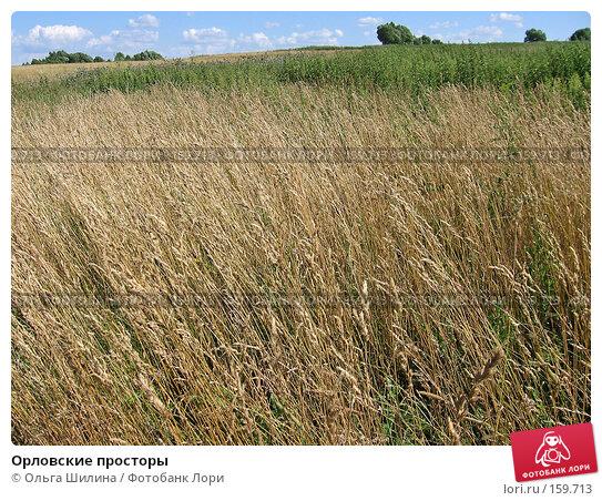 Купить «Орловские просторы», фото № 159713, снято 16 июля 2007 г. (c) Ольга Шилина / Фотобанк Лори